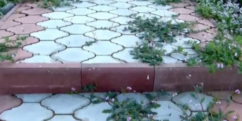 Убираем траву на тротуарной дорожке: простой способ