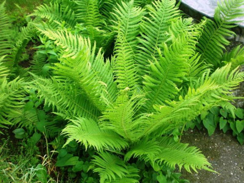 Десять лучших многолетних тенелюбивых растений и цветов для сада