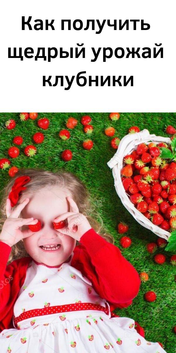 Как получить щедрый урожай клубники