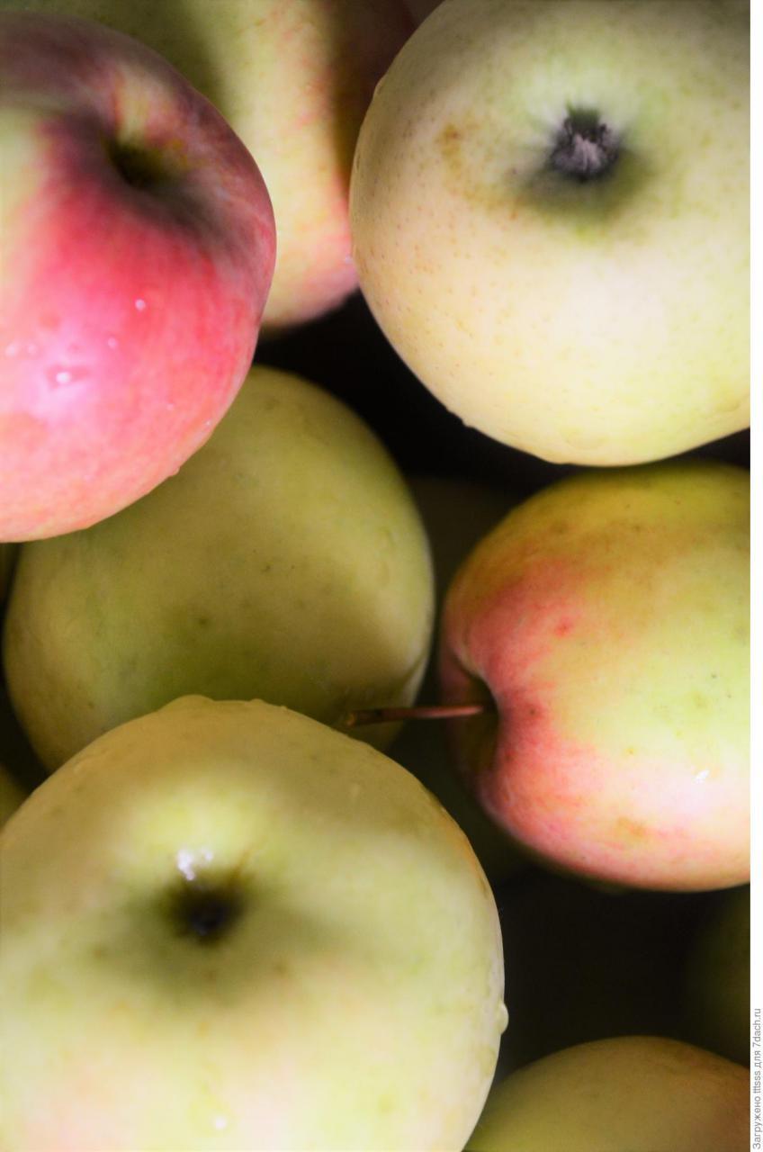 Яблочный штрудель — шикарный десерт для гурманов!