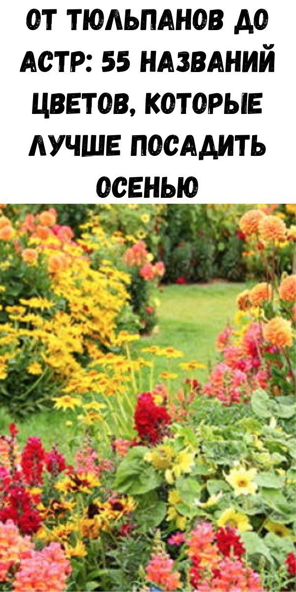 От тюльпанов до астр: 55 названий цветов, которые лучше посадить осенью