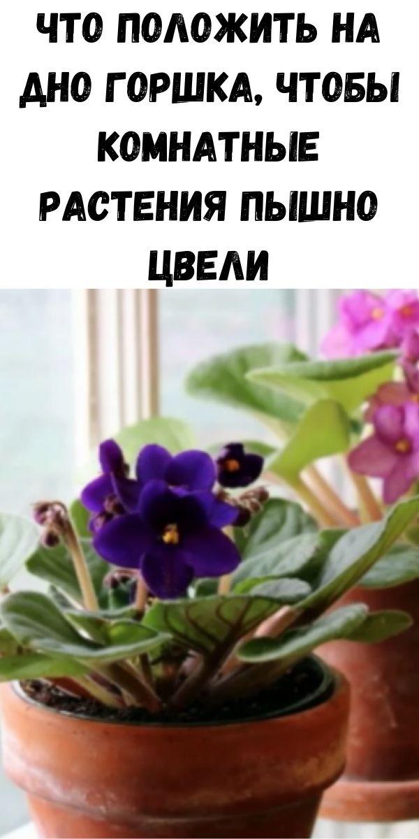 Что положить на дно горшка, чтобы комнатные растения пышно цвели