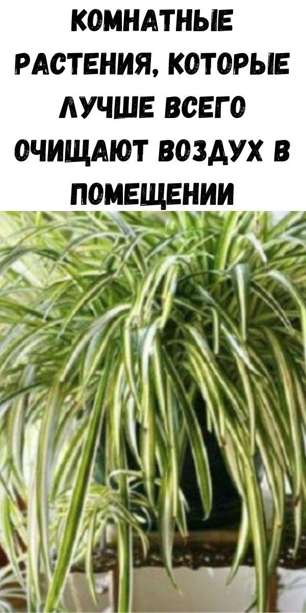 Комнатные растения, которые лучше всего очищают воздух в помещении