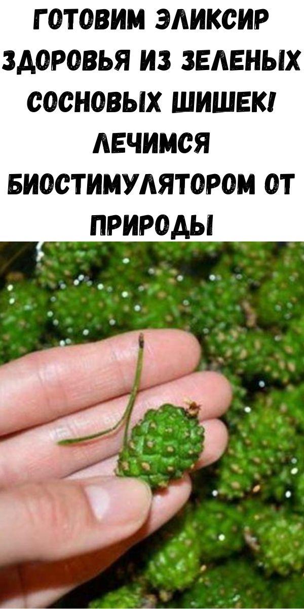 Готовим эликсир здоровья из зеленых сосновых шишек! Лечимся биостимулятором от природы