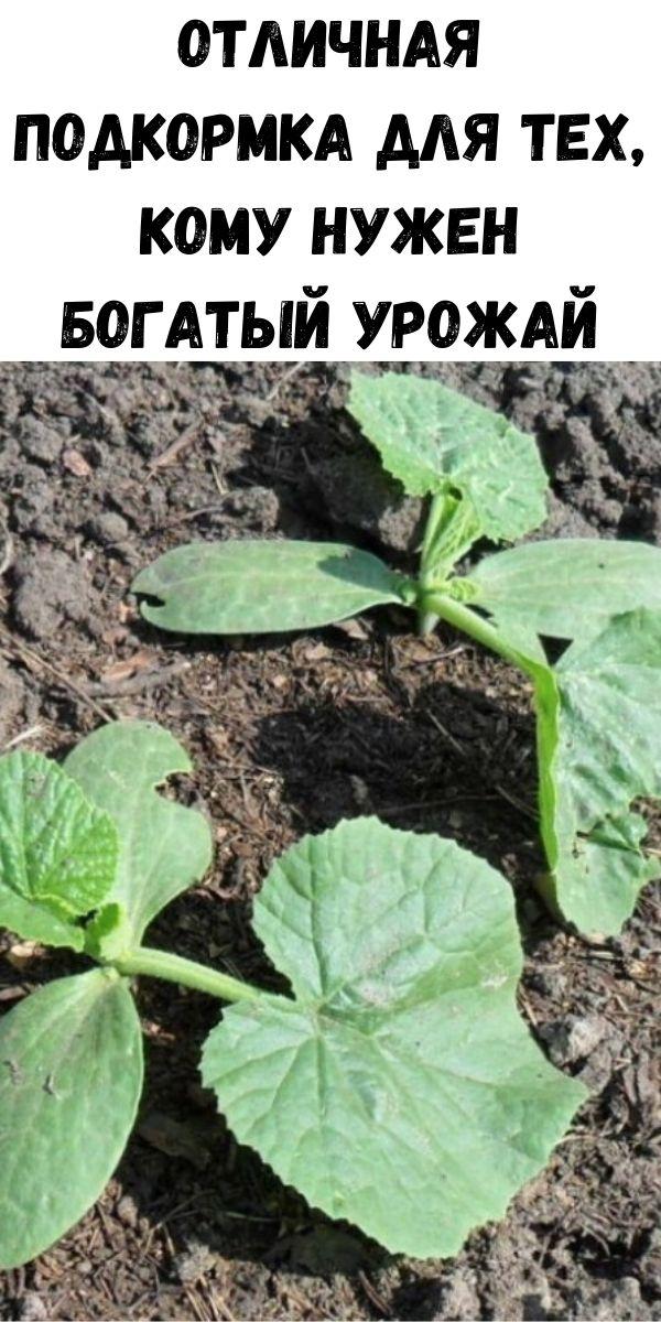Отличная подкормка для тех, кому нужен богатый урожай