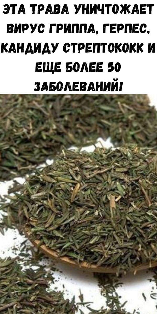 Эта трава уничтожает вирус гриппа, герпес, кандиду стрептококк и еще более 50 заболеваний!