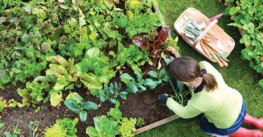 Исследователя находят, что садоводство – это естественный антидепрессант