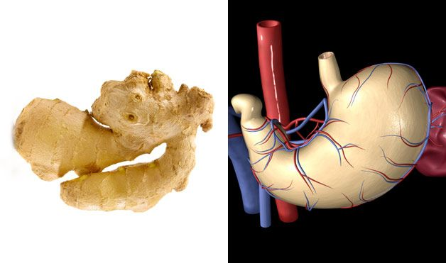 9 продуктов, похожих на органы, для которых они полезны